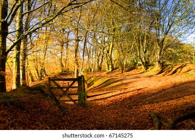 Autumnal scene at Hanchurch woods, Staffordshire