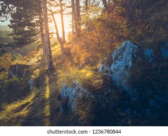 Autumnal scenery with sunset light casting shadows in a coniferous forest. Golden sunlight shining through fir trees at sunrise.