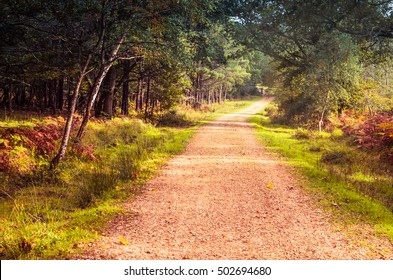 Autumnal scenery.Path in the woods of The New Forest, England, UK.