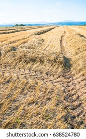 Autumnal stubble field with tractor tracks, and trees in the background
