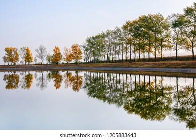autumnal tree row on the shore mirroring in the public swimming lake - Burgenland Austria Apetlon