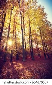 Autumnal trees inside forest. Woodland fall scenery. Nature vegetation season concept.