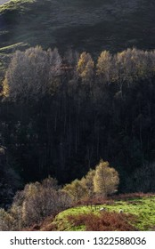 Autumnal trees on a hill at Peak district UK