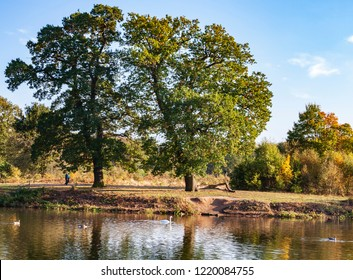 Autumnal tress in Clumber Park, Nottinghamshire, England, October 2018