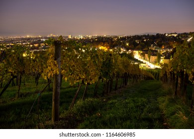Autumnal vineyard landscape in Vienna, Austria. Yellow colored leaves of grapevine in fall season at dusk. Suburban cityscape in the background.