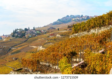 Autumnal vineyards in Chexbres in the  Lavaux region