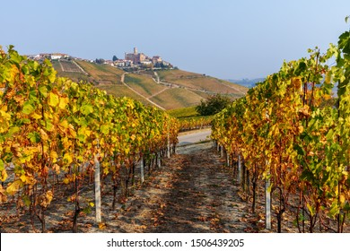 Autumnal vineyards in a row on the hills of Langhe in Piedmont, Northern Italy.