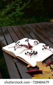 Autumnal writing