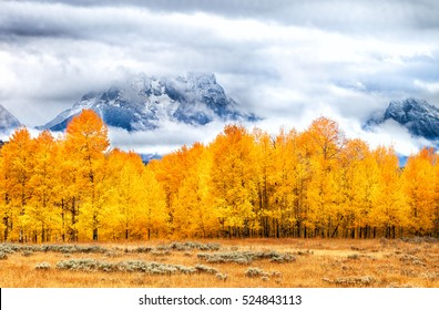 Autumn-Colored Trees in golden grass field with dramatic cloud-covered mountain peaks in the background, Grand Tetons National Park, Wyoming, U.S.A.