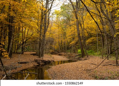 Autumn/Fall foliage and sandstone bluffs in Illinois canyon.  Starved Rock State Park, Illinois