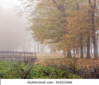 Autumn.Foggy morning in the park