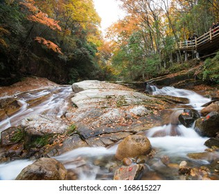 autumn,forest and stream