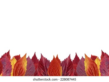 autumn-leaves-lying-on-the-ground