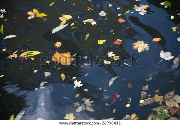 autumn`s leafs floating in water