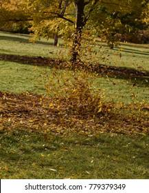 Autumn's leaves flying