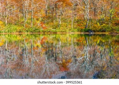 Autumns  tree.