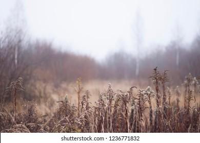 autumn-winter landscape background