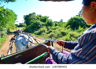AVA, MYANMAR - FEBRUARY 21, 2018: The elderly coachman sits in shabby cart and weits the tourist to make a ride around the ancient city, on February 21 in Ava.