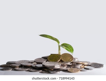 Available light studio shot.Growth Investment.A small green plant grow on the bed of coins over the white background.Business and financial concept.
