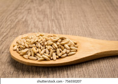 Avena Sativa is scientific name of Oat cereal grain. Also known as Aveia or Avena. Grains in wooden spoon. Rustic.