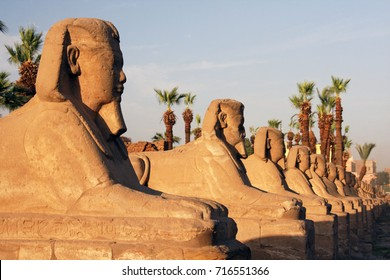 Avenue of the Chinese Headed Sphinxes at the Karnak Temple Complex on the Nile river. Luxor. Egypt.