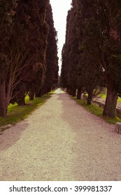 avenue of Cypress trees in Aquileia , Italy   ( vintage saturation )