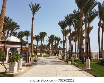 Avenue of date palms Egypt