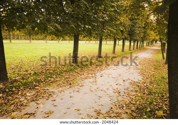 Avenue in garden in bad autumn weather.