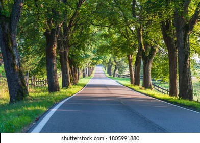 Avenue of old linden trees in Masuria; Poland