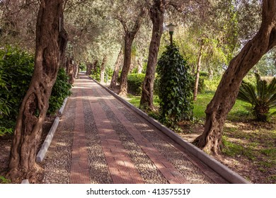 Avenue of olive trees lining the pavement in the park.