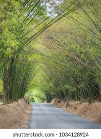 Avenue with road and Bamboo trees in Jamaica