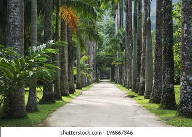 Avenue of royal palm trees at the Jardim Botanico botanic gardens Rio de Janeiro Brazil