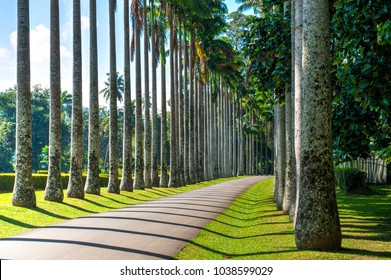 Avenue of royal palms with geometrical shadows