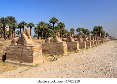 The avenue of sphinxes forming part of Luxor temple in Egypt