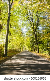 Avenue of trees in autumn.Beautiful road. Background. Green. Sunlight. Nature. Poland.