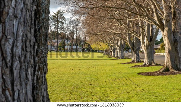 Avenue of trees in Gore, Southland, New Zealand