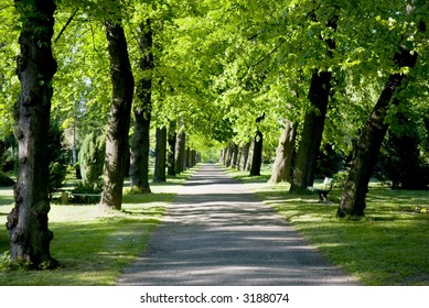 An avenue of trees in a grave yard in Berlin, Germany Background