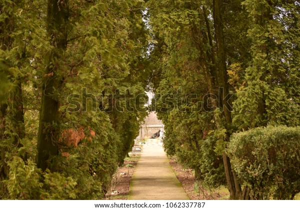 An avenue with trees next to it