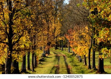 Avenue Trees Schlaegl Austria Stock Photo Edit Now 1240052875