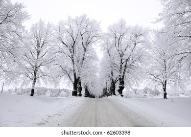 Avenue in winter with trees covered in rime frost