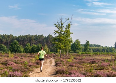 "Averbode, Belgium - August 9, 2020: Runner on a path through heather in bloom, landscape in Averbode ""Bos & Heide"" nature park."