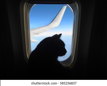 Aviation cat flying in an airplane looking out the porthole overlooking the blue sky wing. Silhouette of cat in the airplane window