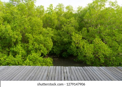 Avicennia alba and wood tarrace in a mangrove forest