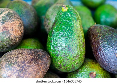 Avocado is Fruit organic many,which is botanically a large berry containing a single seed and very nutritious or contain a wide variety of nutrients, Top view