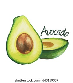 Avocado. Hand drawn watercolor painting on white background.