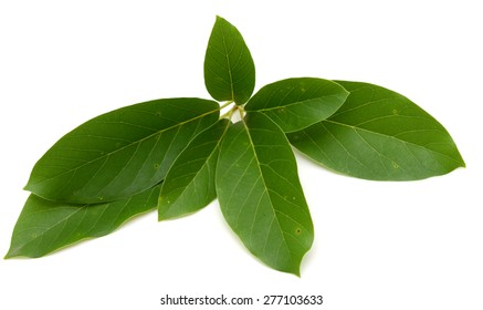 Avocado leaves isolated on a white background.