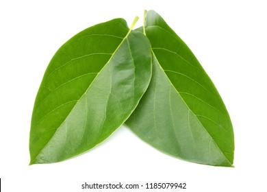 Avocado leaves on white background.