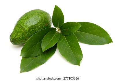 Avocado and lleaves isolated on a white background.