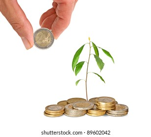 Avocado sapling growing from coins