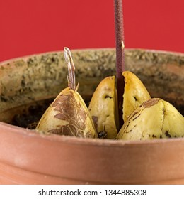 Avocado seed on red background